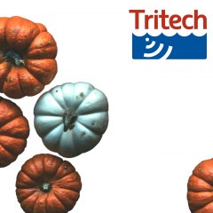 Happy Thanksgiving from Tritech